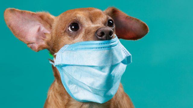 Resultado de imagen para coronavirus mascotas