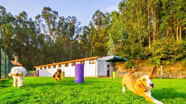Perros en Montegatto