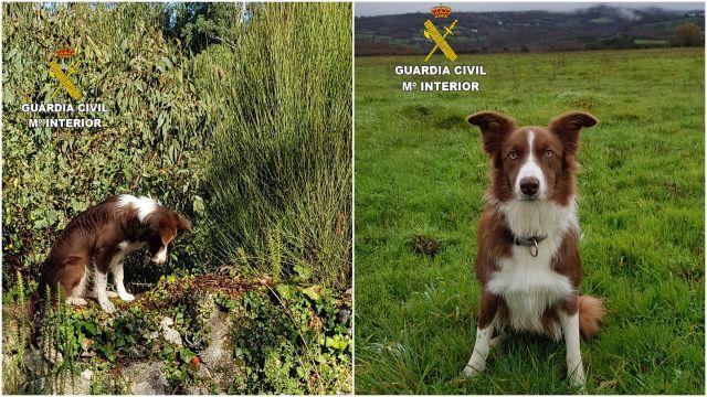 Trudi, nueva incorporación al equipo de la Guardia Civil en Galicia.