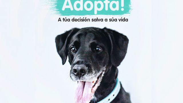 Campaña de adopción promovida por Libera
