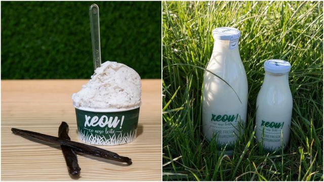Uno de los helados y la leche fresca de Xeou!