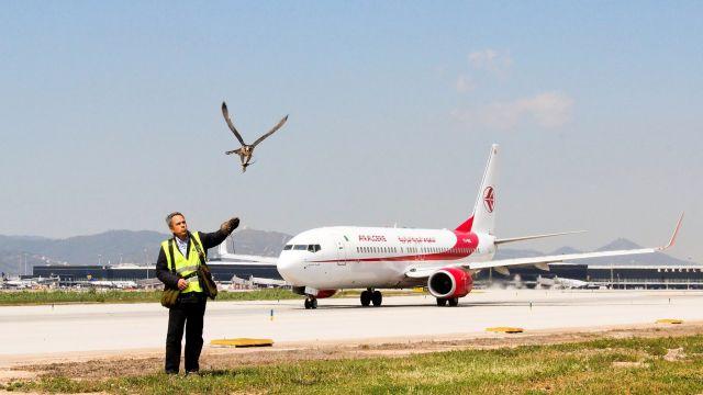 Imagen del servicio de control de fauna en un aeropuerto.