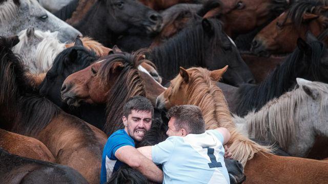 Caballos y 'aloitadores' en las fiestas de la Rapa das Bestas de Sabucedo, en A Estrada, Pontevedra.