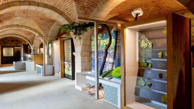 Museo de la Ciencia del Vino