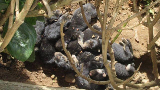 Los cachorros recién nacidos que habían sido abandonados.